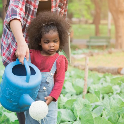 Cute adorable African girl using watering can water vegetable in garden with help from teacher or mother. Learning by doing, nature study for toddler.